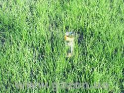 Закладка газона - Руководства - Семена газонных трав