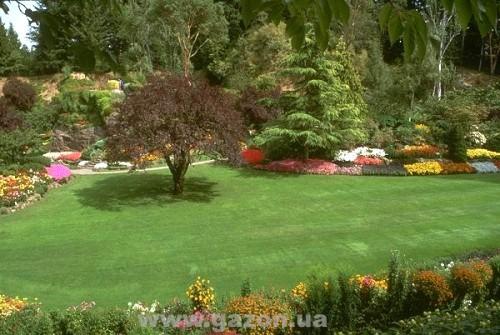 газонна трава канада грин цена